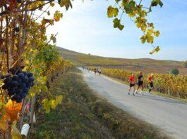 Ecomaratona del Barbaresco e del Tartufo Bianco d'Alba 2020 (classifica e foto)
